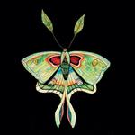 Fantasy Luna Moth