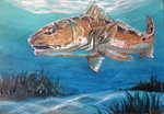 Redfish in the Flats
